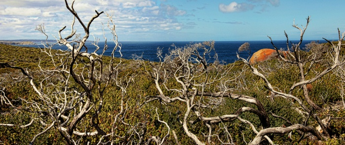Kangaroo Island, South Australia. Photo: Georgie Sharp