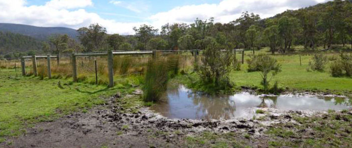 Pest horse damage in front of 14 year old horse exclusion area at Cowombat Flat, Alpine National Park, Vic, in 2013.